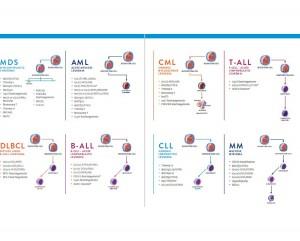 Hematology Probes