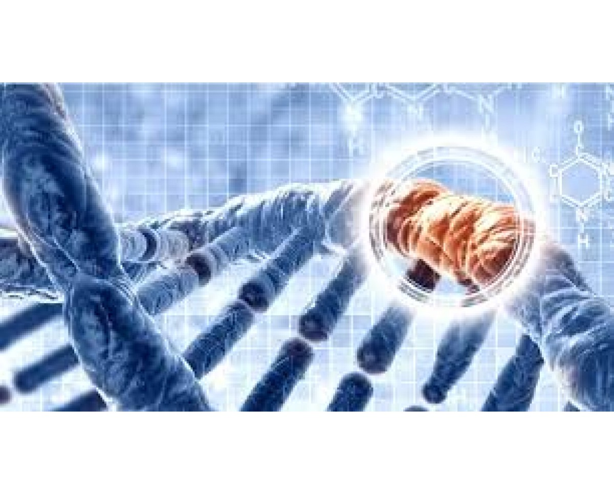 Real Time Pcr Kits For Colorectal Cancer