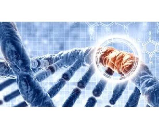 ENTROGEN Real -Time PCR Kits For Breast Cancer Kit in India in India