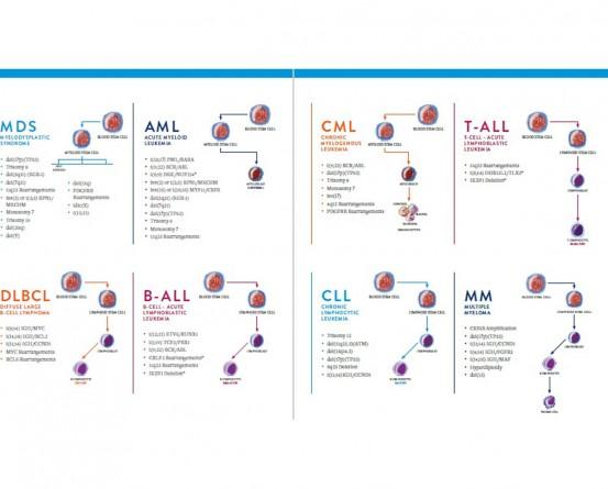 ABBOTT MOLECULAR Hematology Probes in India