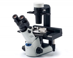 OLYMPUS Olympus CKX53 Microscope in India