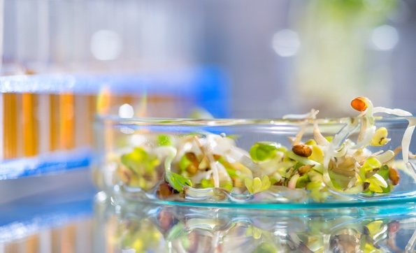 Molecular Biology Based Food Testing